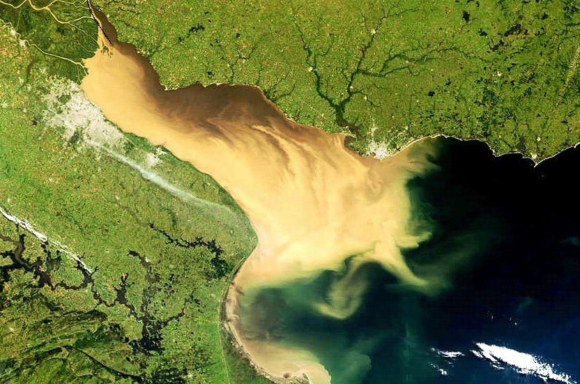 Diario de un naturalista en el Estuario del Plata (II)
