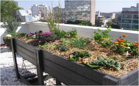 cultivo-urbano-ciudades