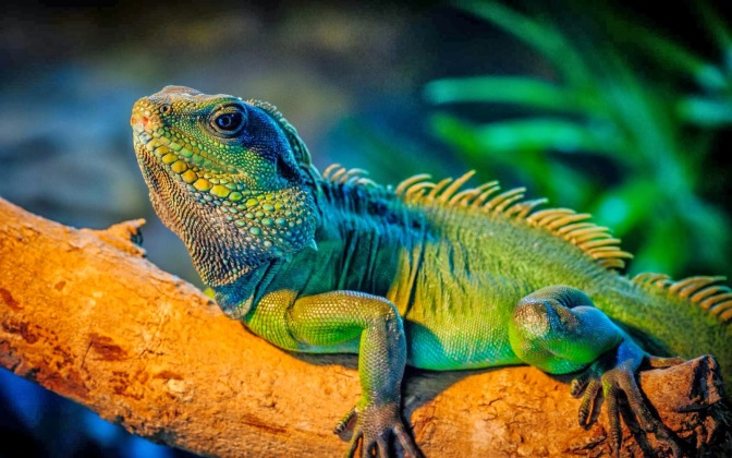 iguana-verde-cuidados-nombres-mascotas